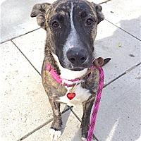 Adopt A Pet :: LunaLoo - Los Angeles, CA