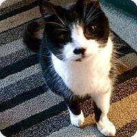 Adopt A Pet :: Macy - Novato, CA