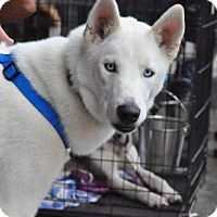 Adopt A Pet :: ACE - Powder Springs, GA