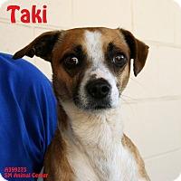 Adopt A Pet :: Taki - Santa Maria, CA