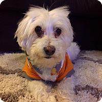 Adopt A Pet :: Cloud - Las Vegas, NV