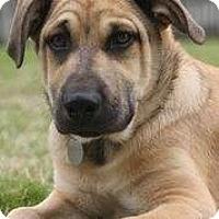 Adopt A Pet :: Kota - Homewood, AL