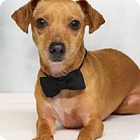Adopt A Pet :: Ricky - Dublin, CA