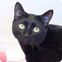 Adopt A Pet :: Loki - Colorado Springs, CO