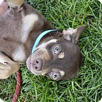 Adopt A Pet :: Samantha - Meridian, ID