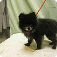Adopt A Pet :: *TEDDY - Upper Marlboro, MD