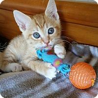 Adopt A Pet :: Austin - Monroe, NC