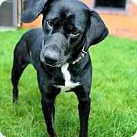 Adopt A Pet :: Pita - Appleton, WI