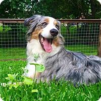 Adopt A Pet :: Sammy - Malakoff, TX