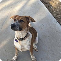 Adopt A Pet :: Kaibab - Phoenix, AZ