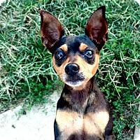Adopt A Pet :: Jackie - Topeka, KS