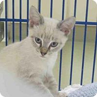 Adopt A Pet :: CHARLIE CHAN - Vero Beach, FL