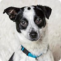 Adopt A Pet :: Paco - McKenna, WA