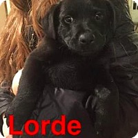 Adopt A Pet :: Lorde - Mission, KS