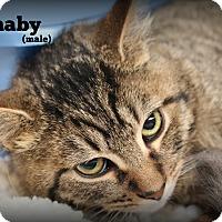 Adopt A Pet :: Barnaby - Springfield, PA