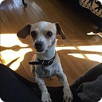 Adopt A Pet :: Eunice - Culver City, CA