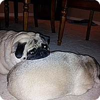 Adopt A Pet :: Peanut Butter - Avondale, PA