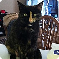 Adopt A Pet :: Senica - Monroe, GA