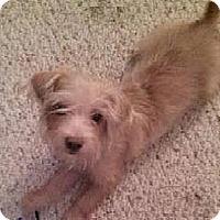 Adopt A Pet :: Roy - Pembroke pInes, FL