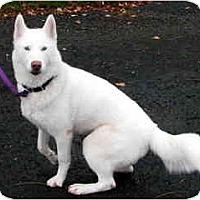 Adopt A Pet :: Chloe - Kettle Falls, WA