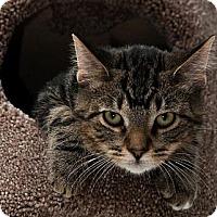Adopt A Pet :: Bebe - Byron Center, MI