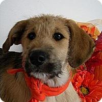 Adopt A Pet :: Bree - Monteregie, QC