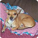 Adopt A Pet :: FOXY
