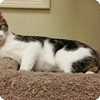 Adopt A Pet :: Sadie - Phoenix, AZ