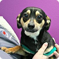 Adopt A Pet :: George - Lufkin, TX