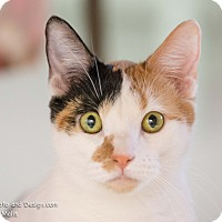 Adopt A Pet :: Haelyn - Fountain Hills, AZ