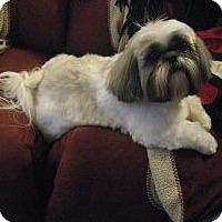 Adopt A Pet :: Mei Mei (courtesy listing) - Richmond, VA