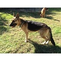 Adopt A Pet :: CJ - Houston, TX