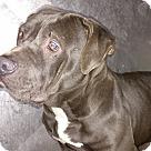 Adopt A Pet :: Sandy - Henderson, NC