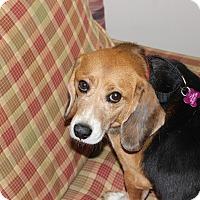 Adopt A Pet :: Turner - Dumfries, VA
