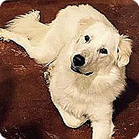 Adopt A Pet :: Leia - Kyle, TX