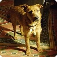 Adopt A Pet :: Splinter - Doylestown, PA