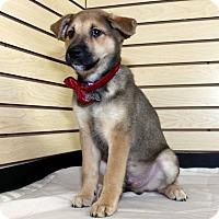 Adopt A Pet :: Virgo - Detroit, MI