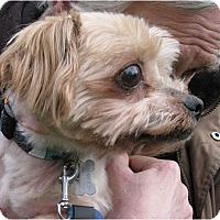 Adopt A Pet :: Sydney - Salem, OR