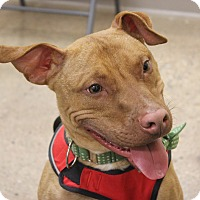 Adopt A Pet :: Cain - Troy, MI