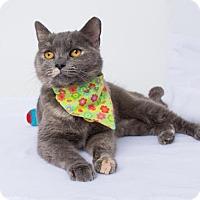 Adopt A Pet :: Etna - Chico, CA