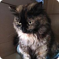 Adopt A Pet :: Delilah - Monrovia, CA