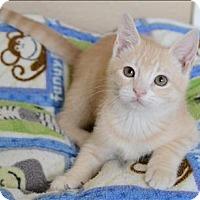 Adopt A Pet :: Georgia Peach - Sherwood, OR