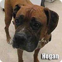 Adopt A Pet :: Hogan - Encino, CA
