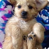 Adopt A Pet :: Giariani - Washington, DC