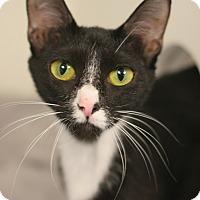 Adopt A Pet :: Roseanna - Staunton, VA