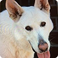 Adopt A Pet :: EARL VON EDE - Los Angeles, CA