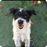 Adopt A Pet :: Chrissy - Toluca Lake, CA