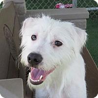 Adopt A Pet :: Pearl - Santa Ana, CA