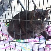Adopt A Pet :: Mamba - Carthage, NC