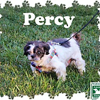 Adopt A Pet :: Percy - Fallston, MD